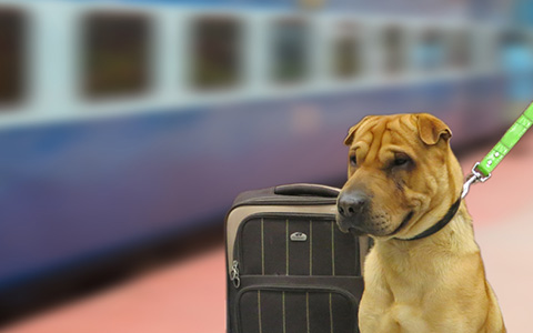 Message-board_travelling-with-dog