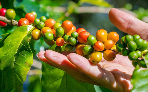 Message-board_coffee-gardens-of-chikmagalur-1527649234