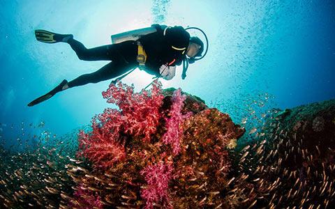 Message board scuba diving destinations in andamans 1540795561