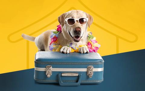 Pet friendly hotels 1513747227