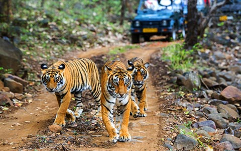 Ry bulletin all you need to know for a bandhavgarh trip 1543401611